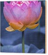 Lavender Lotus Wood Print