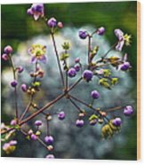 Lavender Mist Explosion Wood Print