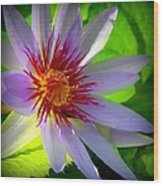 Lavender Passion Wood Print
