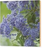 Lavender Pompoms Wood Print