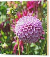 Lavender Purple Dahlia Flowers Art Prints Wood Print