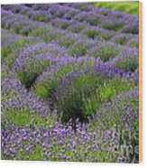 Lavender Rows Wood Print