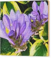 Lavender Spring Flowers Wood Print