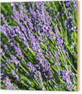 Lavender Square Wood Print