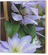 Lavender Star Wood Print