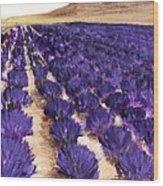 Lavender Study - Marignac-en-diois Wood Print