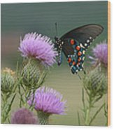 Lavender Thistle And Pipevine Swallowtail Butterfly Wood Print