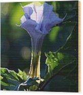 Lavender Trumpet Flower Wood Print