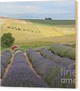 Lavender Valley Wood Print by Carol Groenen