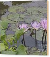 Lavender Waterlilies Wood Print