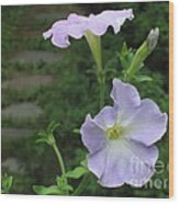 Lavender Whisper Wood Print