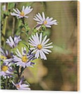 Lavender Wild Flowers Wood Print by Edward Hamilton