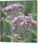 Lavender Wildflower Wood Print