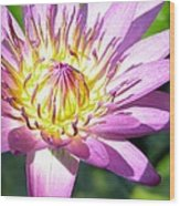 Lavillita Flower 10117 Wood Print