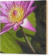 Lavillita_flower 10116 Wood Print