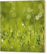 Lawn Twinklers Wood Print