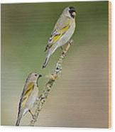 Lawrence Goldfinch Pair On Branch Wood Print