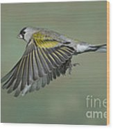 Lawrences Goldfinch Wood Print