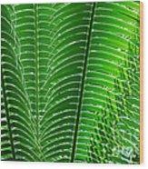 Layered Ferns I Wood Print