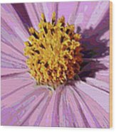 Layers Of A Cosmos Flower Wood Print