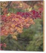 Layers Of Autumn Red Wood Print