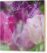 Layers Of Tulips II Wood Print