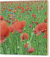 Laying In The Poppy Field Wood Print