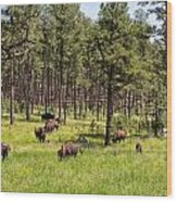 Lazily Grazing Bison Wood Print