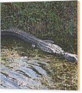 Lazy Alligator Wood Print