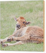 Lazy Bison Calf Or Red Dog Wood Print