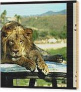Lazy Lion With Poety Wood Print