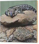 Lazy Lizard 2 Wood Print