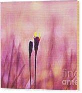 Le Centre De L Attention - Pink S0301 Wood Print