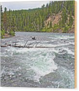 Le Hardy Rapids In Yellowstone River In Yellowstone National Park-wyoming   Wood Print