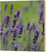 Lea Of Lavender Wood Print