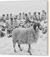 Leader Of The Flock Wood Print