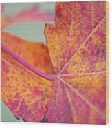 Leaf Abstract In Pink Wood Print