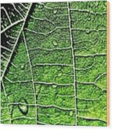 Leaf Abstract - Macro Photography Wood Print