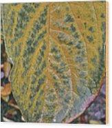 Leaf After Rain Wood Print