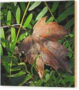 Leaf Among Ferns Wood Print