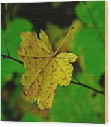 Leaf Caught On A Branch Wood Print