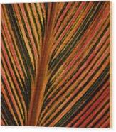 Cannas Plant Leaf Closeup Wood Print
