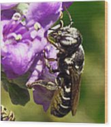 Leaf Cutter Bee Wood Print