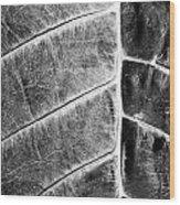 Leaf Detail Wood Print