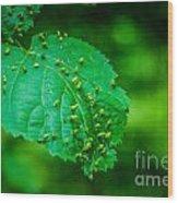 Leaf Gall Wood Print