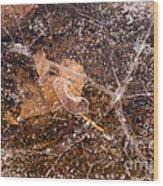 Leaf In Ice Wood Print by Anne Gilbert
