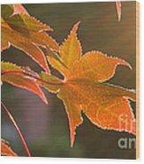 Leaf In The Sun Wood Print