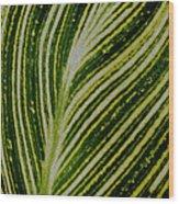 Leaf Lines Wood Print