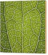Leaf Lines V Wood Print