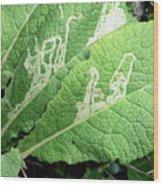 Leaf Miner On Primrose Wood Print